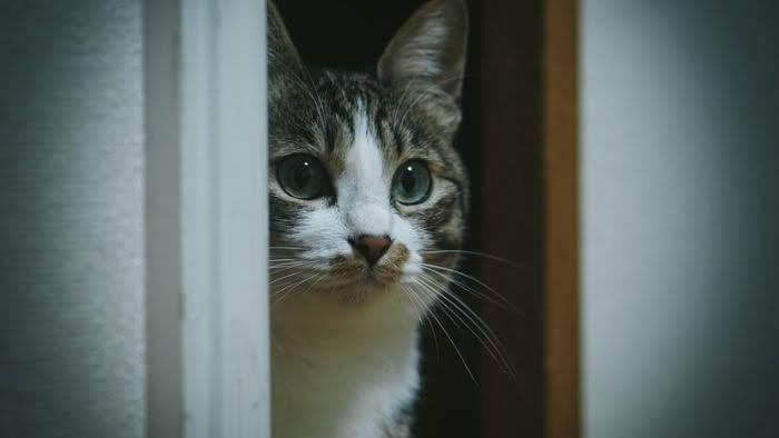 扉の間から顔を出す猫の画像