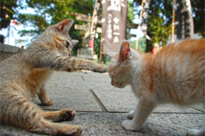 子猫に猫パンチする子猫の写真