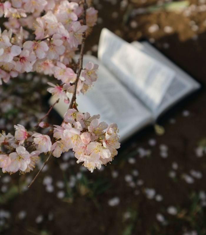 桜の下に本が置かれた写真